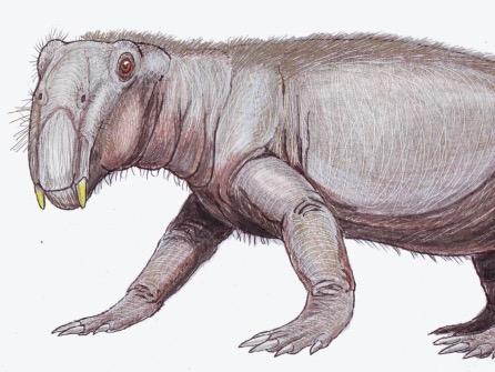 The Lystrosaurus